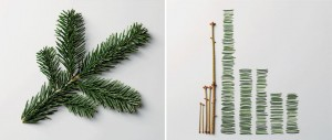 the art of clean up pine branch