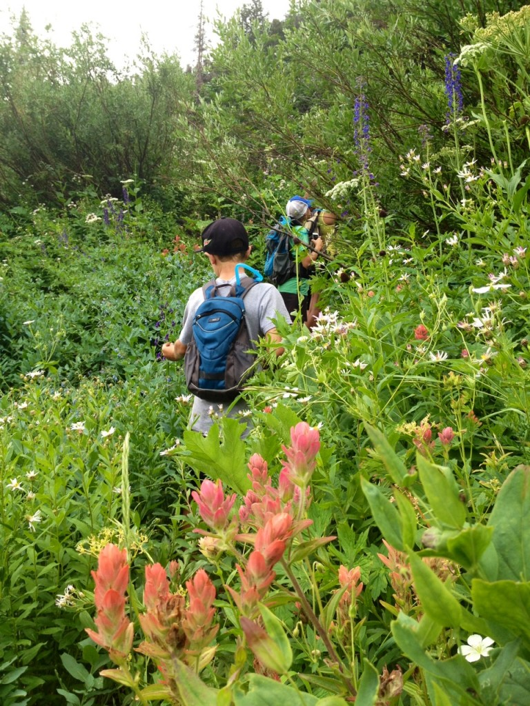 hiking with wildflowers